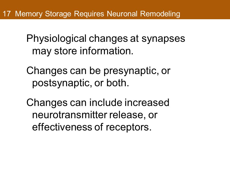 17 Memory Storage Requires Neuronal Remodeling Physiological changes at synapses may store information. Changes can be presynaptic, or postsynaptic, o