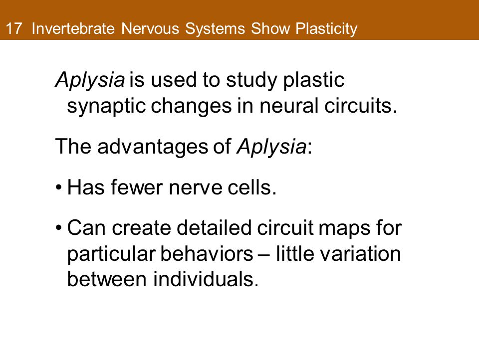 17 Invertebrate Nervous Systems Show Plasticity Aplysia is used to study plastic synaptic changes in neural circuits. The advantages of Aplysia: Has f