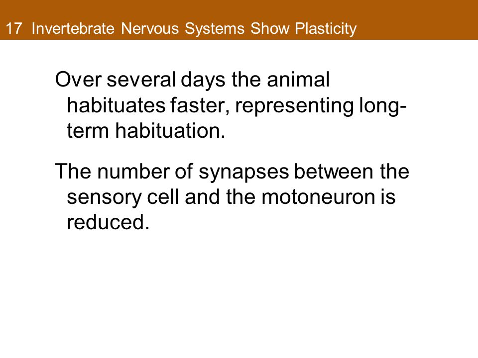 17 Invertebrate Nervous Systems Show Plasticity Over several days the animal habituates faster, representing long- term habituation.