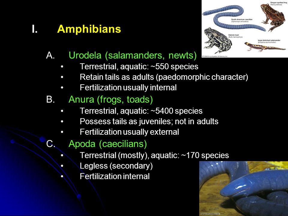 I. I.Amphibians A.