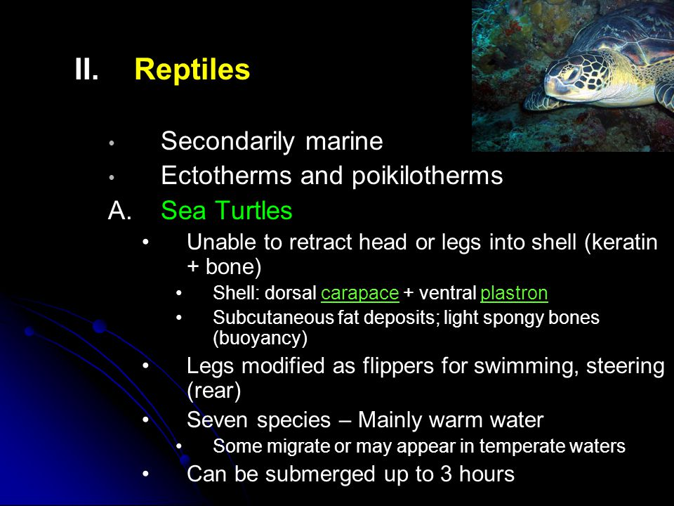 II. II.Reptiles Secondarily marine Ectotherms and poikilotherms A.