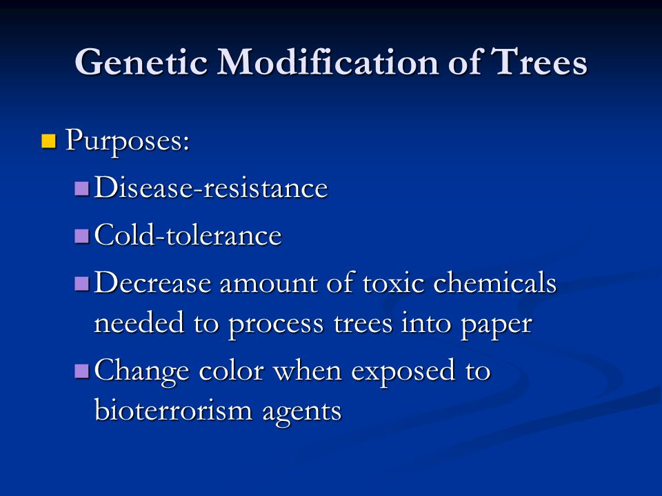 Genetic Modification of Trees Purposes: Purposes: Disease-resistance Disease-resistance Cold-tolerance Cold-tolerance Decrease amount of toxic chemica