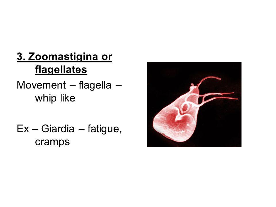 3. Zoomastigina or flagellates Movement – flagella – whip like Ex – Giardia – fatigue, cramps