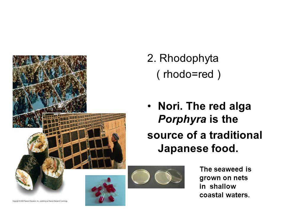 2. Rhodophyta ( rhodo=red ) Nori.