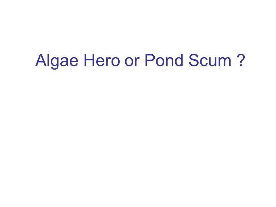 Algae Hero or Pond Scum