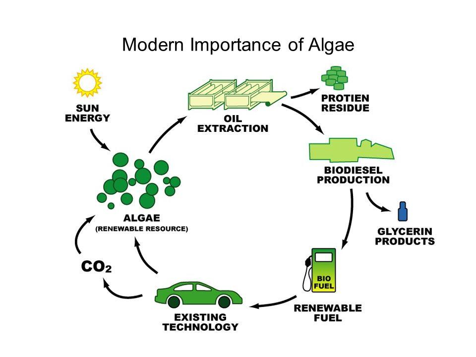 Modern Importance of Algae