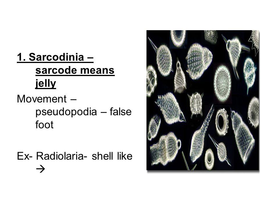 Ex- Entamoeba- parasite causes dysentery Via food, water, utensils Fever, chills
