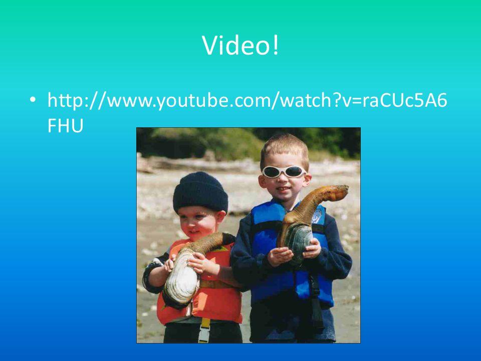 Video! http://www.youtube.com/watch?v=raCUc5A6 FHU