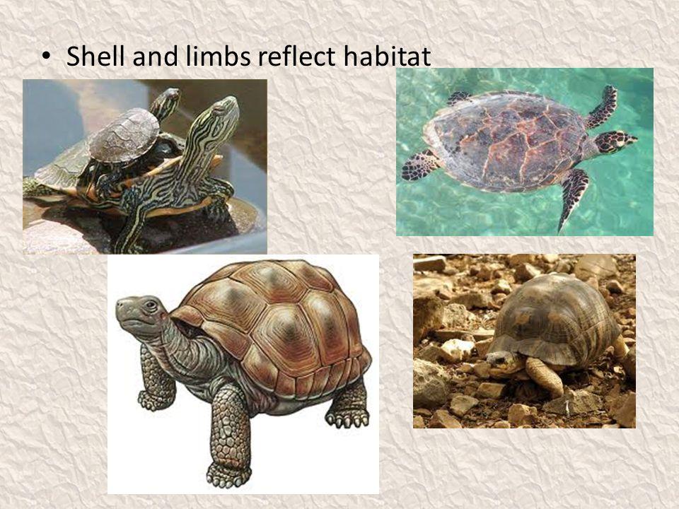 Shell and limbs reflect habitat