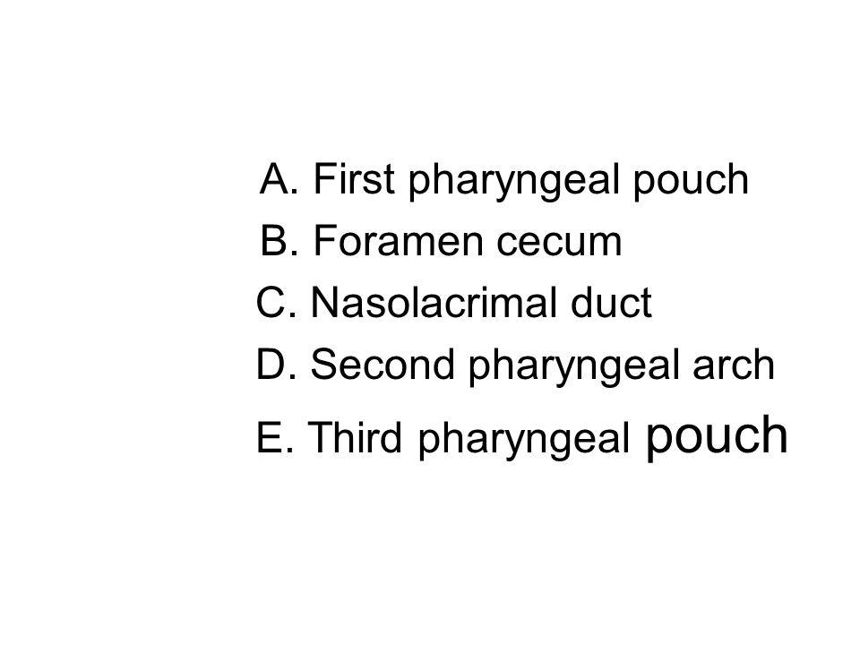 A. First pharyngeal pouch B. Foramen cecum C. Nasolacrimal duct D. Second pharyngeal arch E. Third pharyngeal pouch