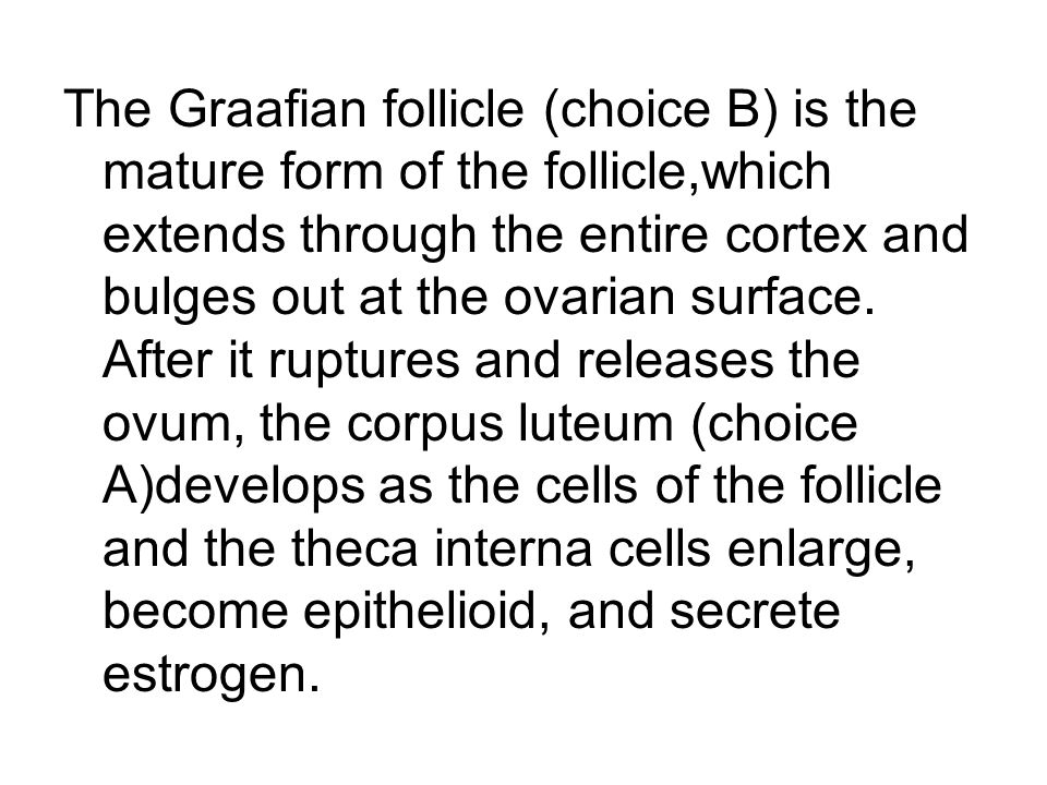 The Graafian follicle (choice B) is the mature form of the follicle,which extends through the entire cortex and bulges out at the ovarian surface. Aft