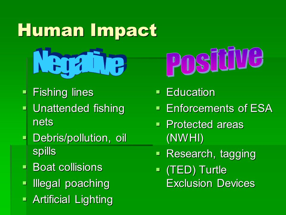 Human Impact  Fishing lines  Unattended fishing nets  Debris/pollution, oil spills  Boat collisions  Illegal poaching  Artificial Lighting  Edu
