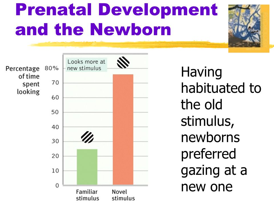Prenatal Development and the Newborn Having habituated to the old stimulus, newborns preferred gazing at a new one