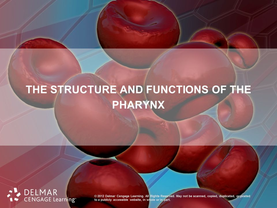 THE STRUCTURE AND FUNCTIONS OF THE PHARYNX