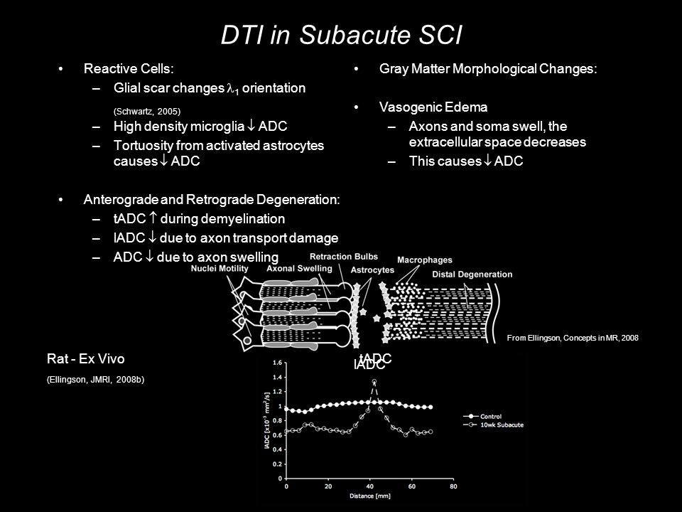 DTI in Subacute SCI Reactive Cells: –Glial scar changes 1 orientation (Schwartz, 2005) –High density microglia  ADC –Tortuosity from activated astrocytes causes  ADC Anterograde and Retrograde Degeneration: –tADC  during demyelination –lADC  due to axon transport damage –ADC  due to axon swelling Gray Matter Morphological Changes: Vasogenic Edema –Axons and soma swell, the extracellular space decreases –This causes  ADC Rat - Ex Vivo (Ellingson, JMRI, 2008b) lADC tADC From Ellingson, Concepts in MR, 2008