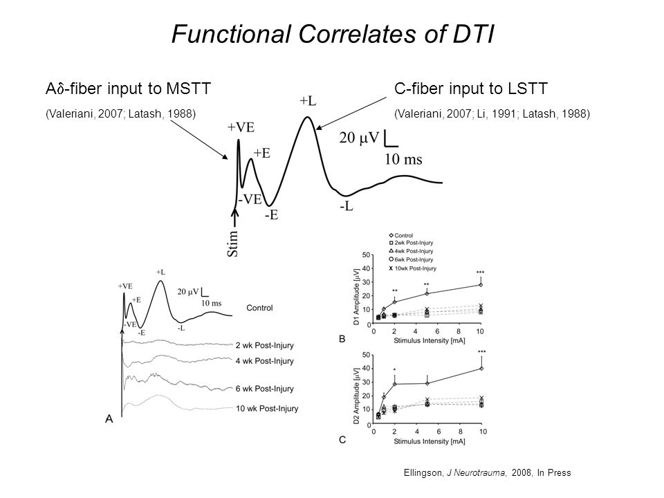 Functional Correlates of DTI C-fiber input to LSTT (Valeriani, 2007; Li, 1991; Latash, 1988) A  -fiber input to MSTT (Valeriani, 2007; Latash, 1988) Ellingson, J Neurotrauma, 2008, In Press