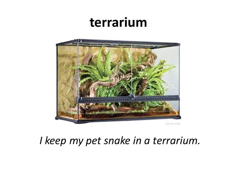 terrarium I keep my pet snake in a terrarium.
