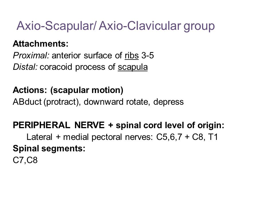 Axio-Scapular/ Axio-Clavicular group Attachments: Proximal: anterior surface of ribs 3-5 Distal: coracoid process of scapula Actions: (scapular motion) ABduct (protract), downward rotate, depress PERIPHERAL NERVE + spinal cord level of origin: Lateral + medial pectoral nerves: C5,6,7 + C8, T1 Spinal segments: C7,C8