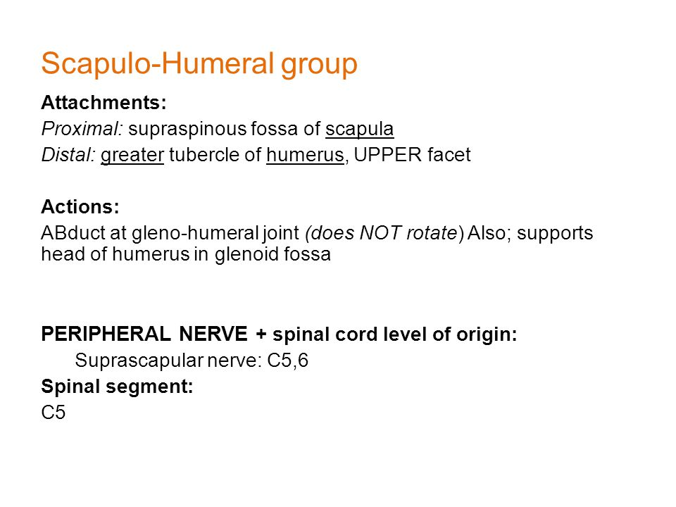 Scapulo-Humeral group Attachments: Proximal: supraspinous fossa of scapula Distal: greater tubercle of humerus, UPPER facet Actions: ABduct at gleno-humeral joint (does NOT rotate) Also; supports head of humerus in glenoid fossa PERIPHERAL NERVE + spinal cord level of origin: Suprascapular nerve: C5,6 Spinal segment: C5