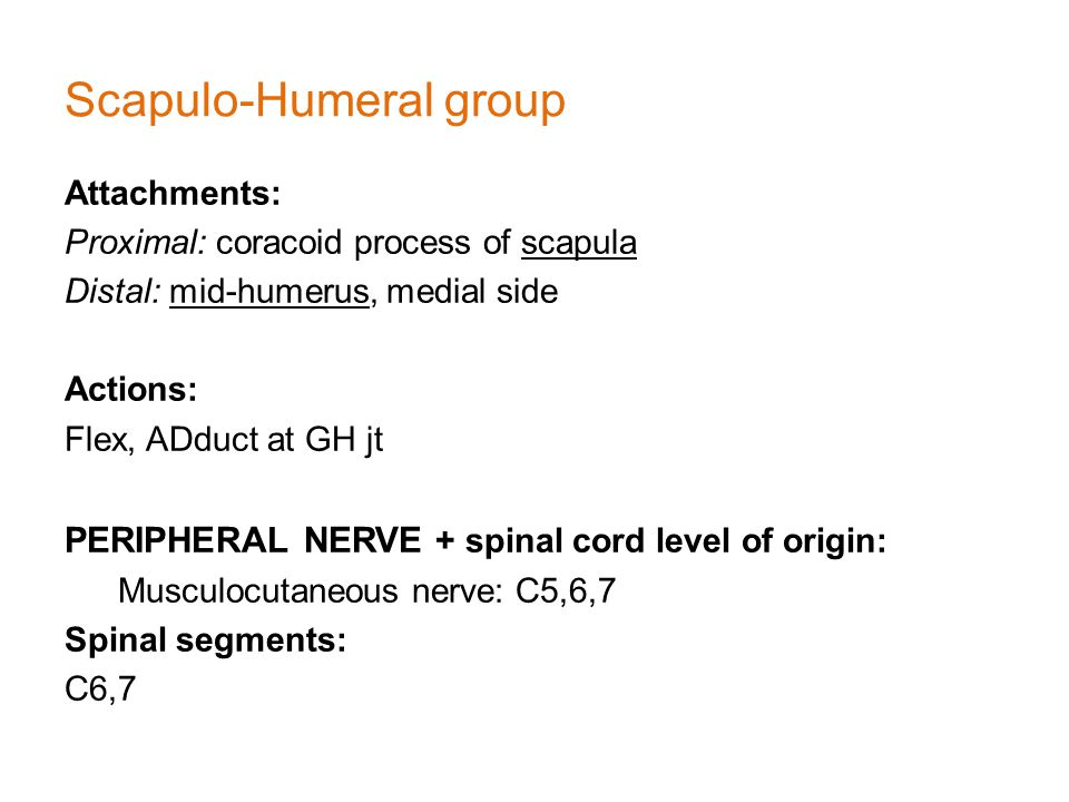 Scapulo-Humeral group Attachments: Proximal: coracoid process of scapula Distal: mid-humerus, medial side Actions: Flex, ADduct at GH jt PERIPHERAL NERVE + spinal cord level of origin: Musculocutaneous nerve: C5,6,7 Spinal segments: C6,7