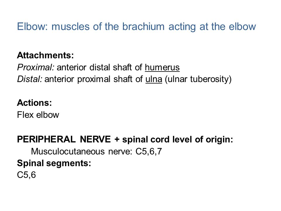 Elbow: muscles of the brachium acting at the elbow Attachments: Proximal: anterior distal shaft of humerus Distal: anterior proximal shaft of ulna (ulnar tuberosity) Actions: Flex elbow PERIPHERAL NERVE + spinal cord level of origin: Musculocutaneous nerve: C5,6,7 Spinal segments: C5,6