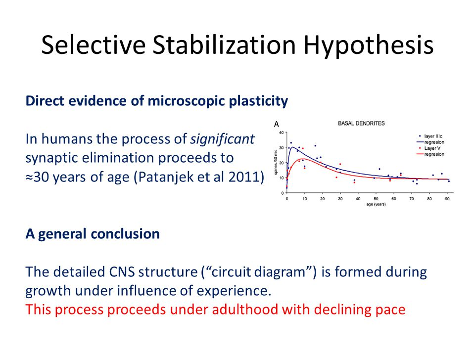 Selective Stabilization Hypothesis Direct evidence of microscopic plasticity In humans the process of significant synaptic elimination proceeds to ≈30 years of age (Patanjek et al 2011) A general conclusion The detailed CNS structure ( circuit diagram ) is formed during growth under influence of experience.