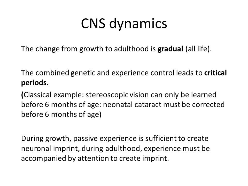 CNS dynamics The change from growth to adulthood is gradual (all life).