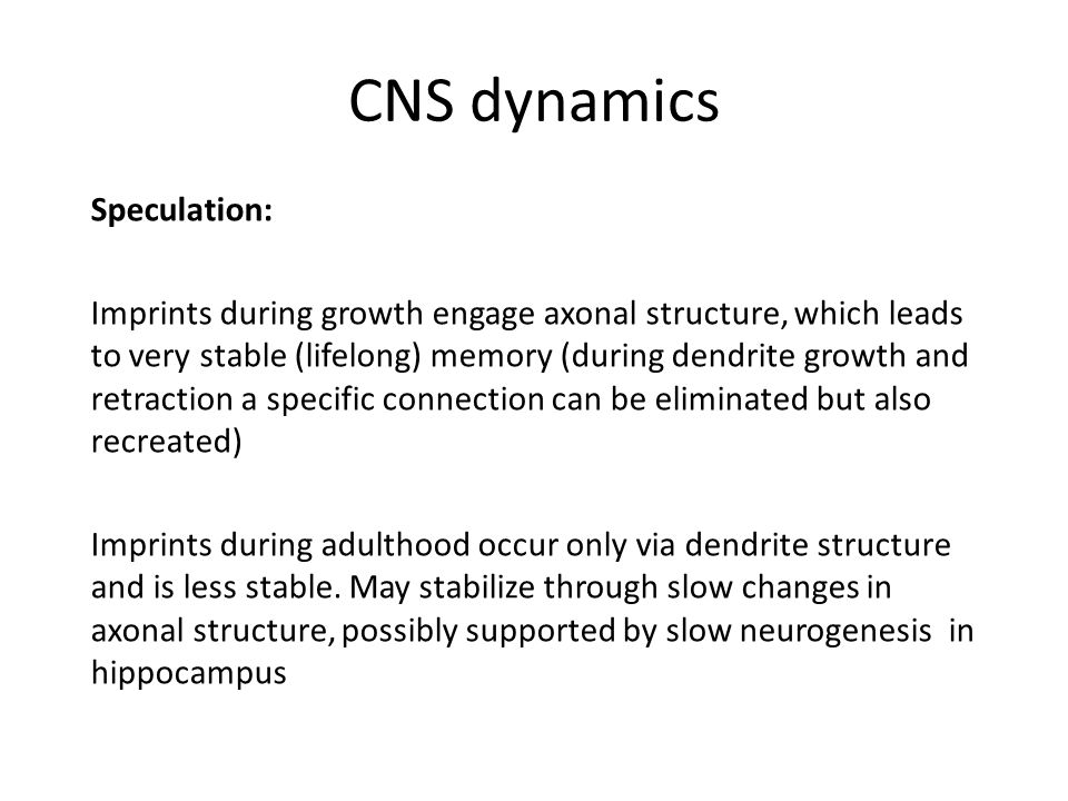CNS dynamics Speculation: Imprints during growth engage axonal structure, which leads to very stable (lifelong) memory (during dendrite growth and retraction a specific connection can be eliminated but also recreated) Imprints during adulthood occur only via dendrite structure and is less stable.