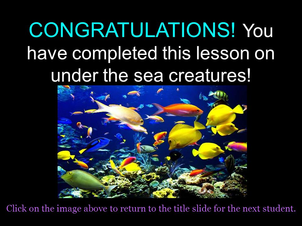 Good Try! Starfish DO NOT have brains. Try Again!