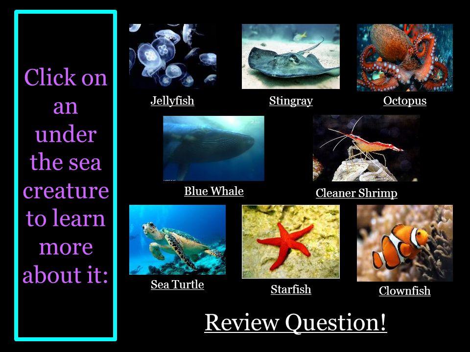 Under the Sea Ms. Lamond Second grade, Science