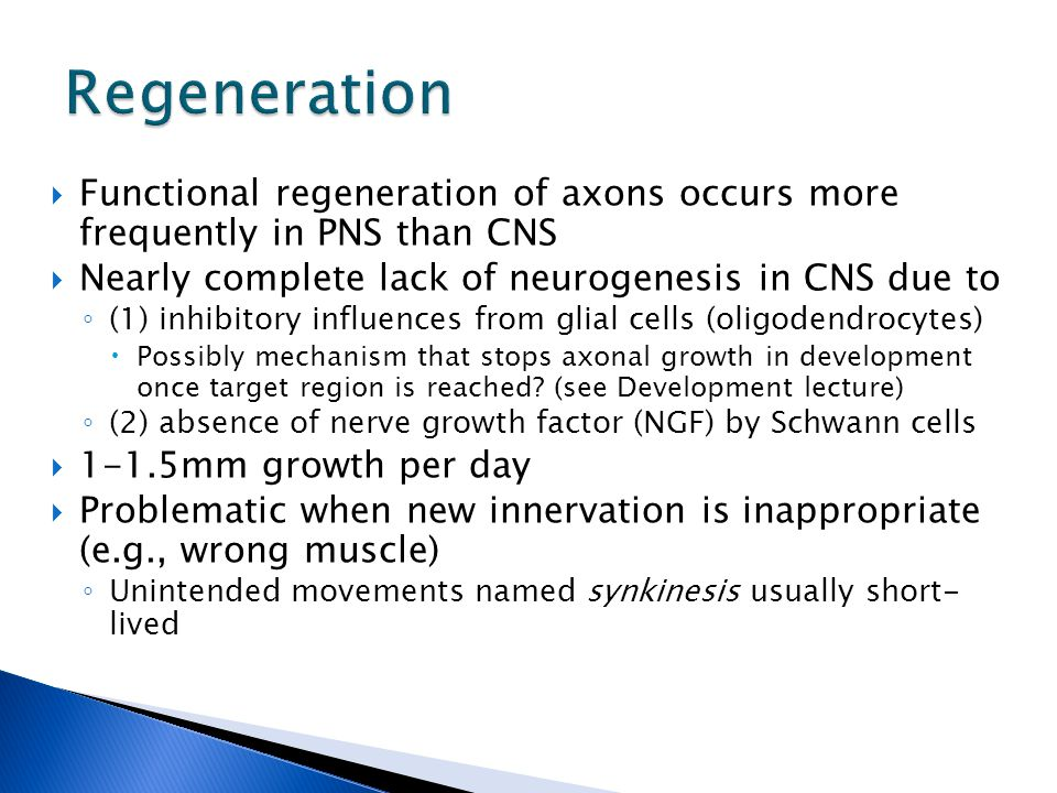  Functional regeneration of axons occurs more frequently in PNS than CNS  Nearly complete lack of neurogenesis in CNS due to ◦ (1) inhibitory influences from glial cells (oligodendrocytes)  Possibly mechanism that stops axonal growth in development once target region is reached.