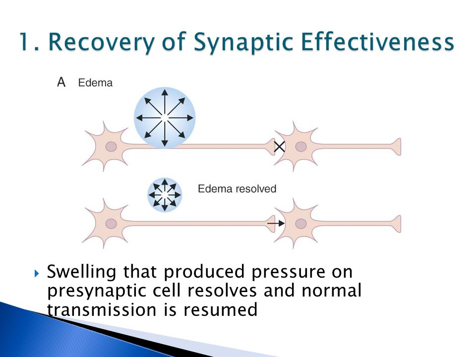  Swelling that produced pressure on presynaptic cell resolves and normal transmission is resumed