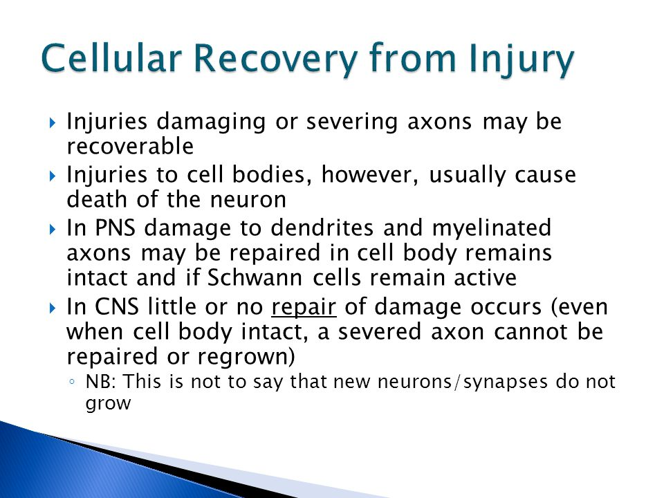  Injuries damaging or severing axons may be recoverable  Injuries to cell bodies, however, usually cause death of the neuron  In PNS damage to dendrites and myelinated axons may be repaired in cell body remains intact and if Schwann cells remain active  In CNS little or no repair of damage occurs (even when cell body intact, a severed axon cannot be repaired or regrown) ◦ NB: This is not to say that new neurons/synapses do not grow