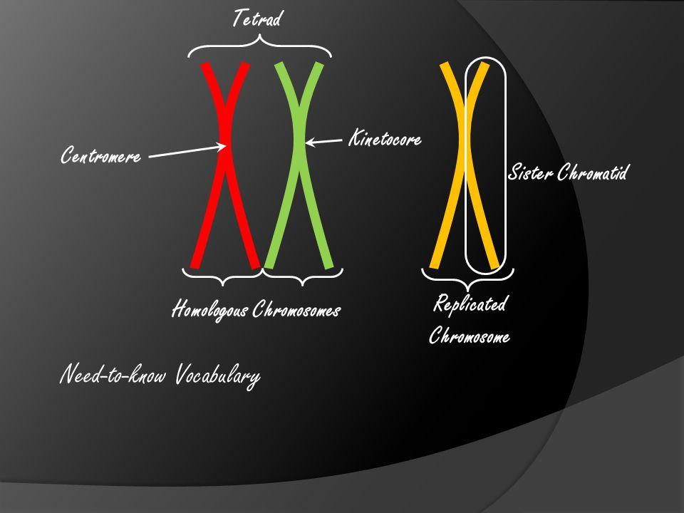 Need-to-know Vocabulary Homologous Chromosomes Replicated Chromosome Centromere Kinetocore Sister Chromatid Tetrad