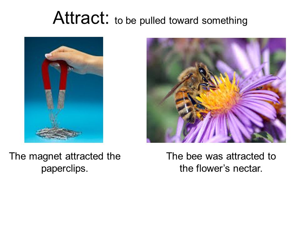 Attract: to be pulled toward something The magnet attracted the paperclips.