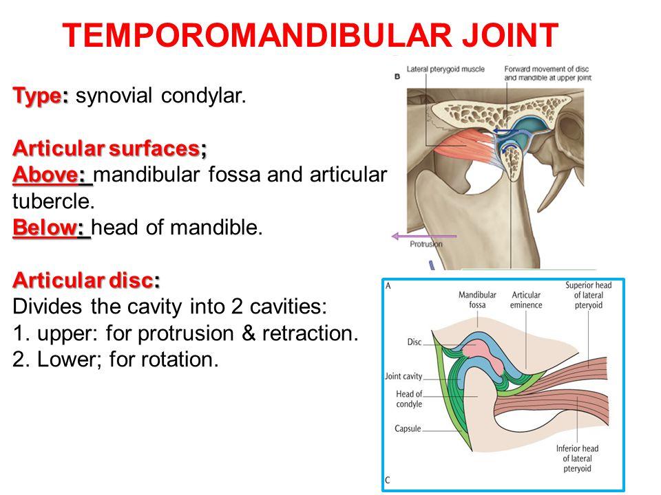 TEMPOROMANDIBULAR JOINT Type: Type: synovial condylar. Articular surfaces; Above: Above: mandibular fossa and articular tubercle. Below: Below: head o