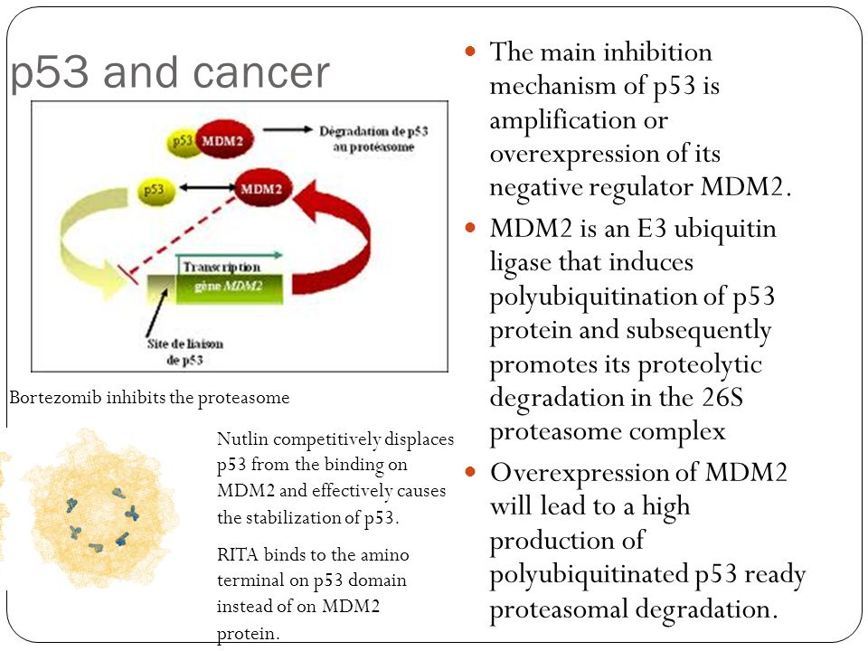 p53 and cancer The main inhibition mechanism of p53 is amplification or overexpression of its negative regulator MDM2. MDM2 is an E3 ubiquitin ligase
