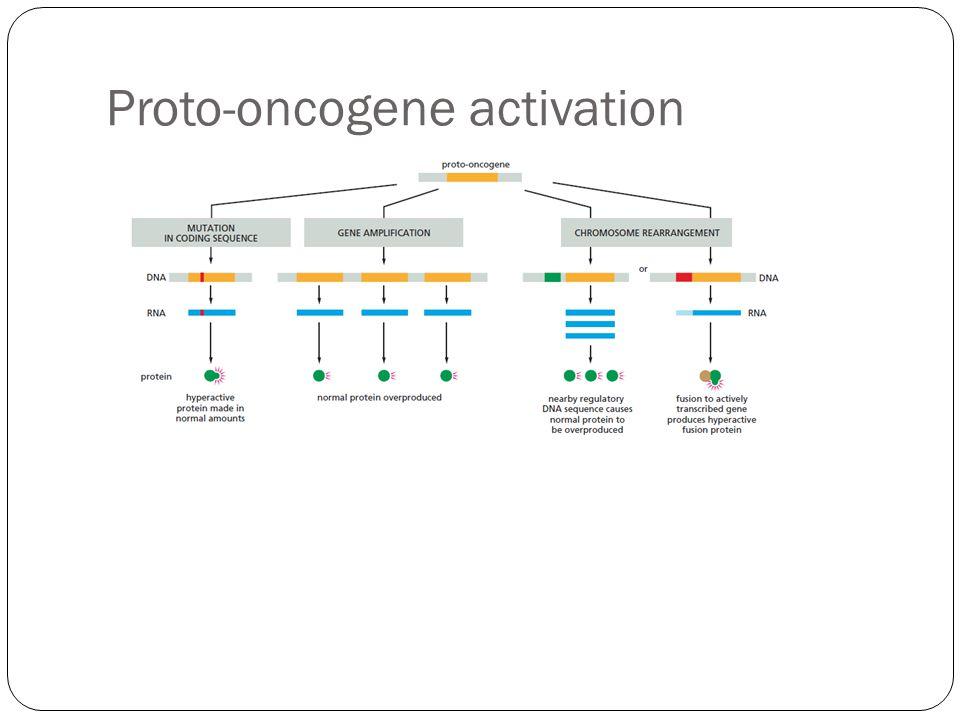Proto-oncogene activation