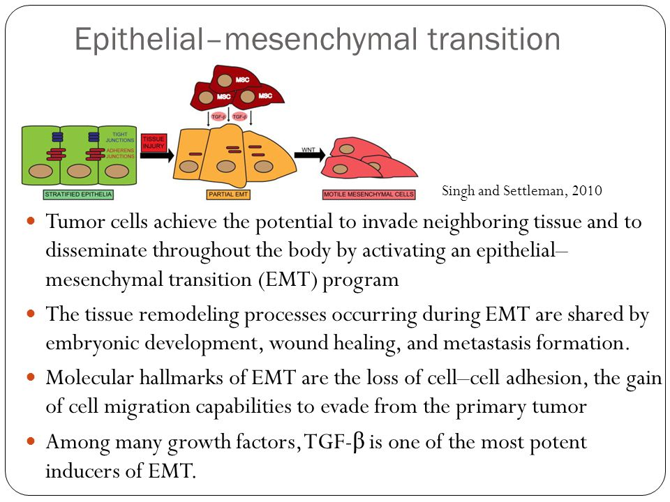 Epithelial–mesenchymal transition (EMT) Tumor cells achieve the potential to invade neighboring tissue and to disseminate throughout the body by activ