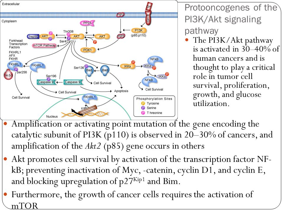 Protooncogenes of the PI3K/Akt signaling pathway Amplification or activating point mutation of the gene encoding the catalytic subunit of PI3K (p110) is observed in 20–30% of cancers, and amplification of the Akt2 (p85) gene occurs in others Akt promotes cell survival by activation of the transcription factor NF- kB; preventing inactivation of Myc, -catenin, cyclin D1, and cyclin E, and blocking upregulation of p27 Kip1 and Bim.