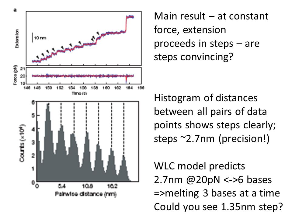 Main result – at constant force, extension proceeds in steps – are steps convincing? Histogram of distances between all pairs of data points shows ste