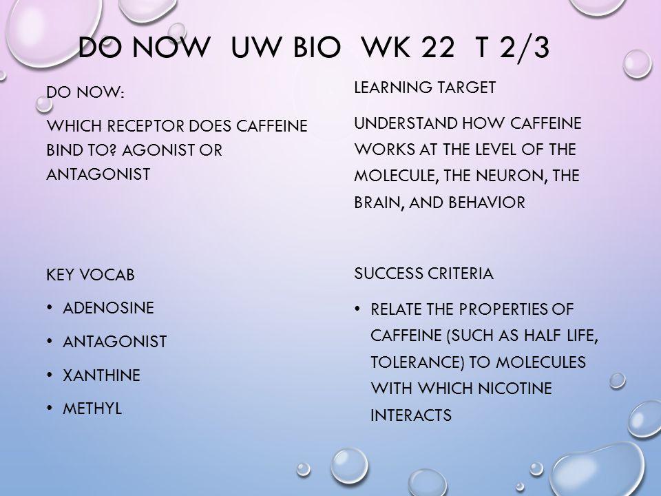 DO NOW UW BIO WK 22 T 2/3 DO NOW: WHICH RECEPTOR DOES CAFFEINE BIND TO.