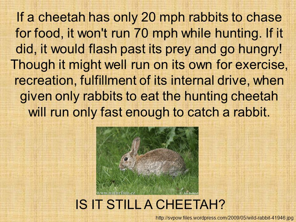 If a cheetah has only 20 mph rabbits to chase for food, it won t run 70 mph while hunting.