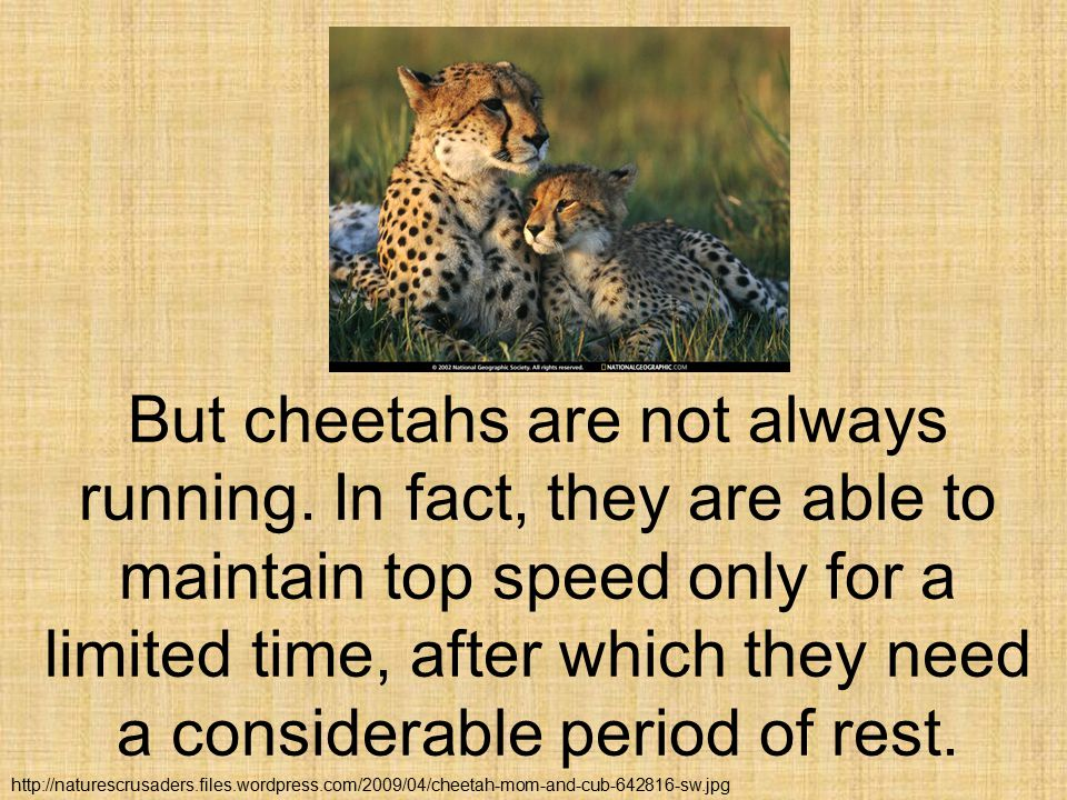It s not difficult to identify a cheetah when it isn t running, provided we know its other characteristics.
