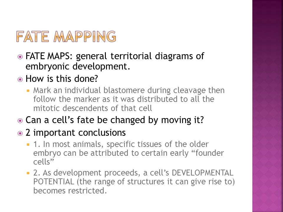  FATE MAPS: general territorial diagrams of embryonic development.