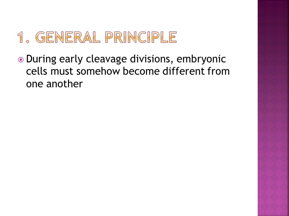  During early cleavage divisions, embryonic cells must somehow become different from one another