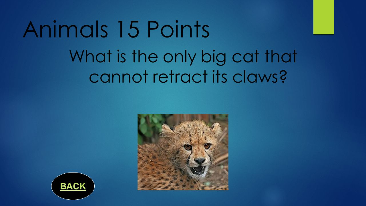 Animals 10 Points  The animal (insect) responsible for the most human deaths world- wide is the ____________.