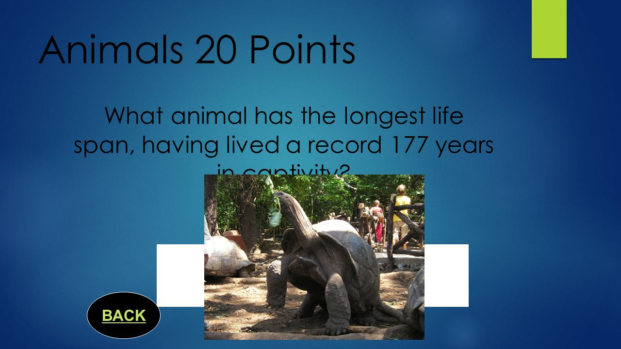 Animals 15 Points What is the only big cat that cannot retract its claws? BACK