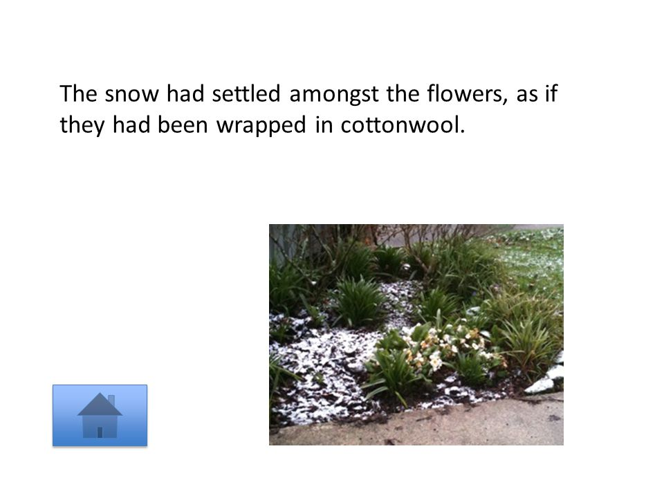 The snow had settled amongst the flowers, as if they had been wrapped in cottonwool.