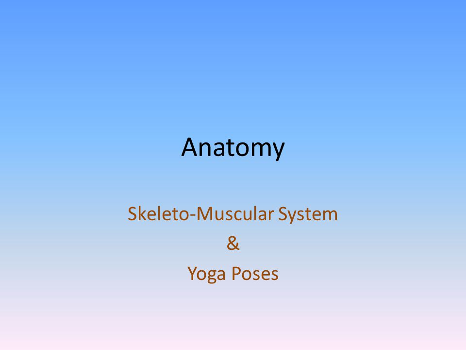 Anatomy Skeleto-Muscular System & Yoga Poses